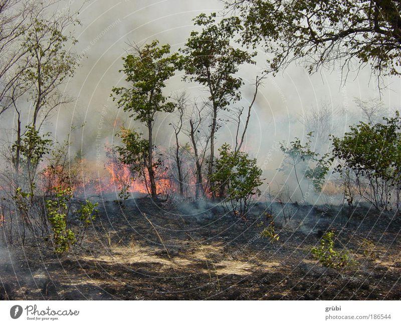Buschbrand in Botswana Natur Wald Landschaft Feuer gefährlich Safari