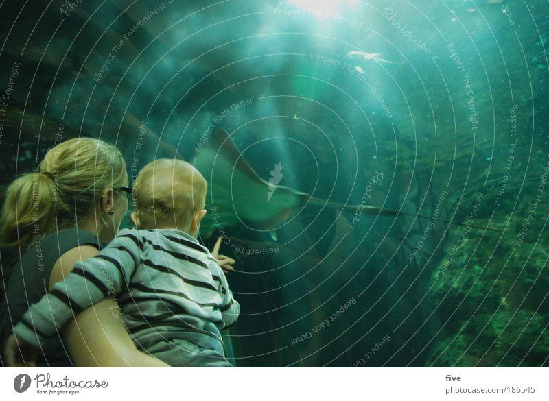 batoidea Mensch Kind Familie & Verwandtschaft Wasser blau grün Ferien & Urlaub & Reisen Tier Erwachsene Junge Baby Schwimmen & Baden Fisch Mutter bedrohlich Kleinkind