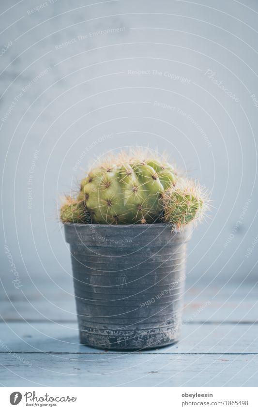 Kaktuspflanze klein, Weinlesefarben, selektiver Fokus Natur Pflanze Baum Lifestyle Kunst Abenteuer Konzert Künstler Kunstwerk