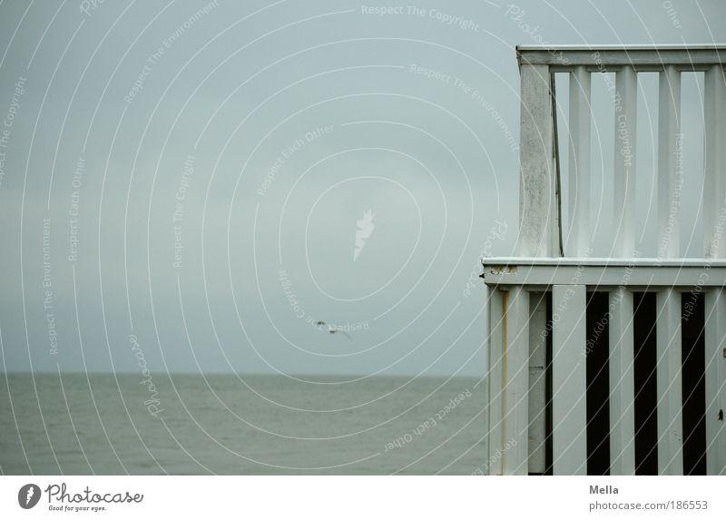 Trübe Aussichten mit Möwe Natur Wasser Himmel Meer Ferien & Urlaub & Reisen ruhig Einsamkeit Ferne Freiheit grau Stimmung Küste Umwelt frei Horizont Ausflug