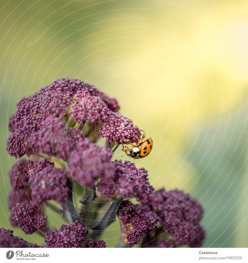 Kopfunter Natur Pflanze Sommer grün Tier gelb Bewegung klein Garten orange Feld Kraft ästhetisch Fröhlichkeit Schönes Wetter violett