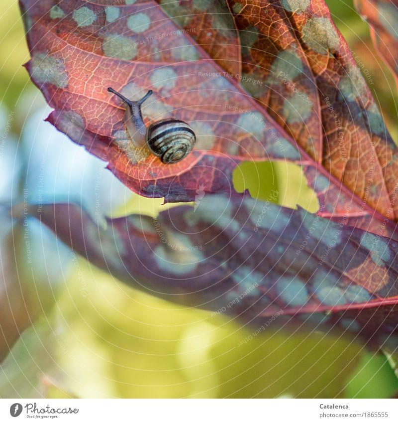 Blattoberseite Natur Pflanze grün rot Tier gelb Herbst Bewegung Garten braun Zufriedenheit glänzend ästhetisch Schnecke verblüht
