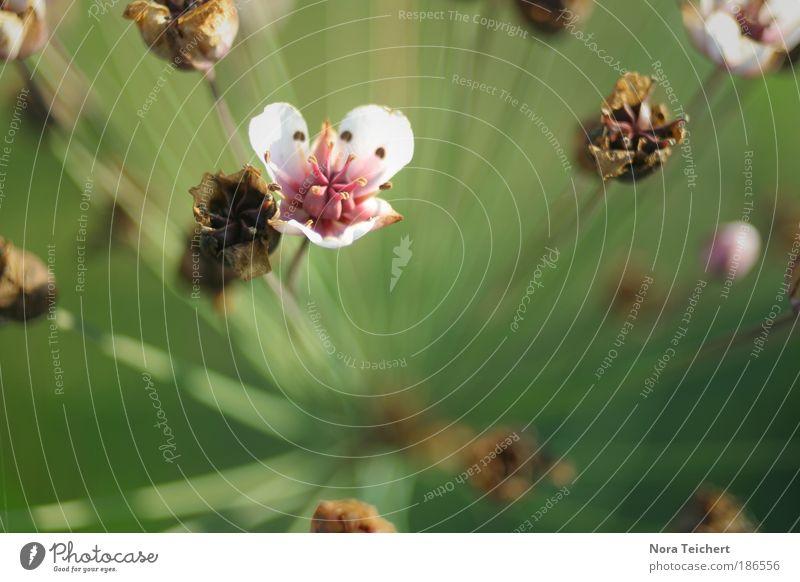 Der Sonne entgegen ... Natur schön Blume Pflanze Sommer Blatt Blüte Gras Frühling Glück träumen Park Landschaft rosa Umwelt verrückt