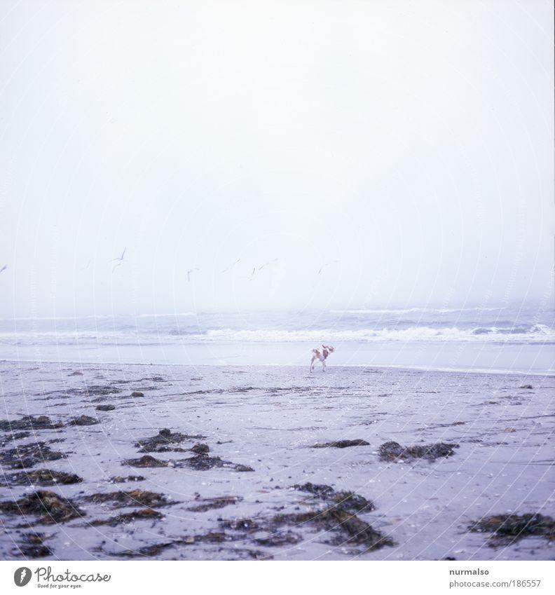 DAS ist harmonisch ruhig Freizeit & Hobby Meer Natur Landschaft Winter Nebel Ostsee Tier Hund 1 Tierjunges frei hell Gedeckte Farben Textfreiraum oben Morgen