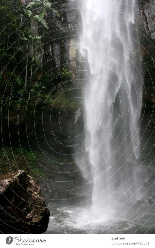 Protesterfall Natur Landschaft Pflanze Urelemente Wasser Wassertropfen Sommer schlechtes Wetter Nebel Regen Wärme Moos Grünpflanze exotisch Urwald Schlucht