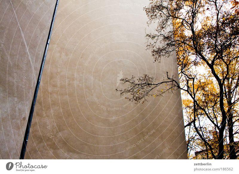 Friedenauer Mauer Herbst Jahreszeiten Hinterhof hinterhaus seitenflügel Haus Gebäude Brandmauer Mieter Vermieter Baum Ast Zweig Blatt Herbstlaub Schatten