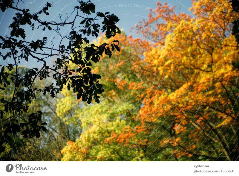 Herbstlaub Natur schön Baum Blatt ruhig Wald Erholung Leben Umwelt träumen Zeit ästhetisch einzigartig Wandel & Veränderung Vergänglichkeit