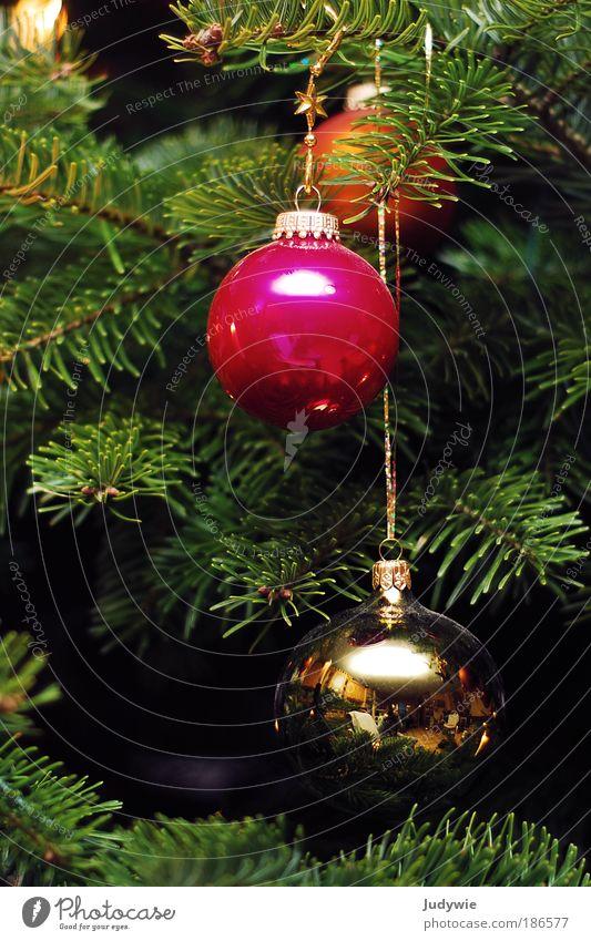 Noël Natur Weihnachten & Advent Pflanze grün Winter Glück Feste & Feiern Stimmung rosa Wohnung glänzend Zufriedenheit Häusliches Leben Dekoration & Verzierung