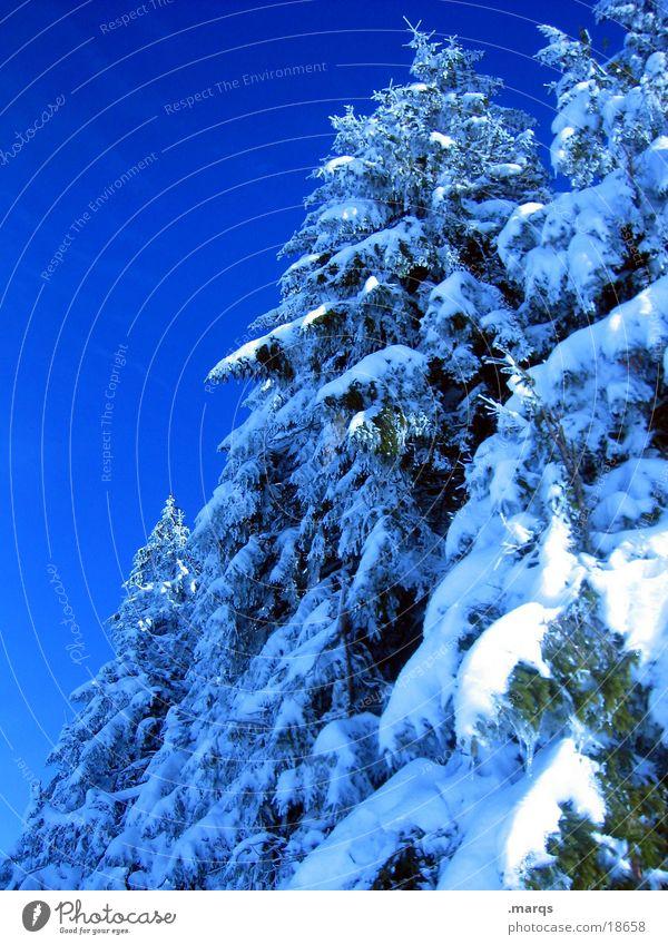 Kälte Himmel blau weiß Baum Winter Wald kalt Schnee Eis Ast Zweig Tanne bedecken Nadelbaum Fichte Waldrand