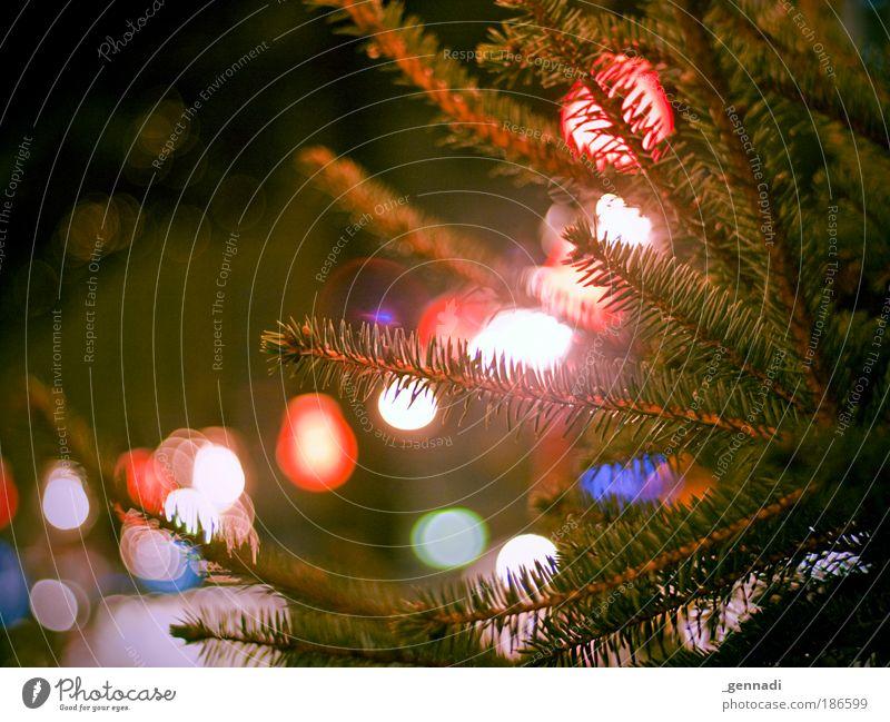 Weihnachtsmarkt in HX Natur Tanne Tannenzweig Glühbirne Unschärfe grün Lichterkette Weihnachten & Advent Warmes Licht Vorfreude Farbfoto Außenaufnahme