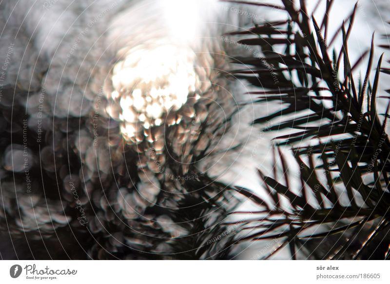 Kamehame-Ha Natur Sonne Sonnenlicht Pflanze Tannenzweig leuchten grün Kraft Macht Klima Sonnenenergie glühen strahlend Strahlung hell Energie
