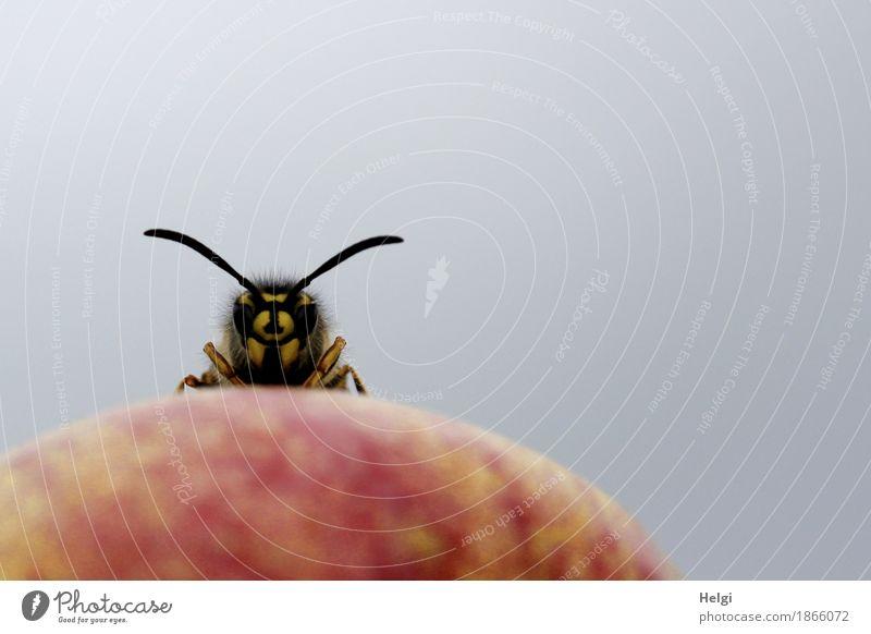 moin ... Natur rot Tier schwarz Umwelt gelb Leben klein außergewöhnlich grau Wildtier stehen einzigartig Neugier Bioprodukte Apfel