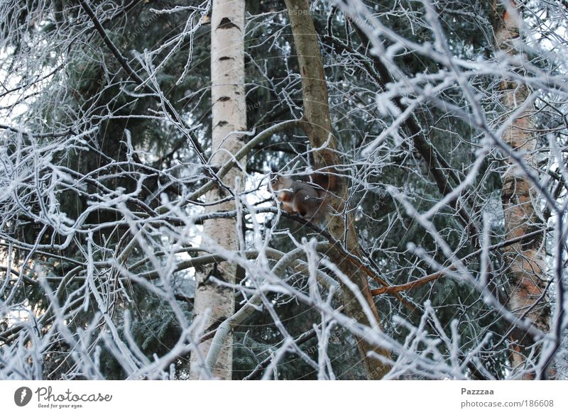 Tier-Suchbild Natur Baum Winter Leben Ernährung Freiheit Glück Eis Wildtier Sträucher Frost Fell entdecken Jagd rothaarig