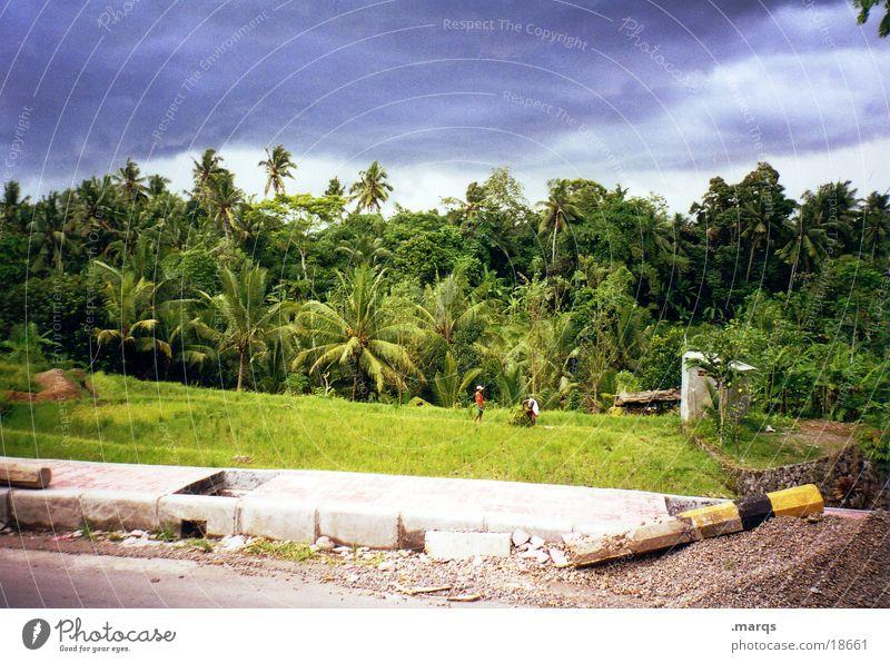 Balinesischer Urwald Natur Ferien & Urlaub & Reisen Wolken Wald Straße Insel Reisefotografie heiß Asien Unwetter Palme Indonesien