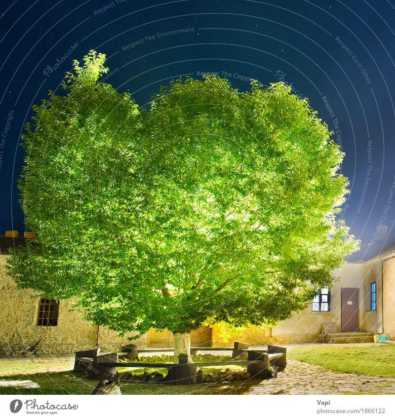 Grüner glühender Baum im Nachtpark Himmel Natur Pflanze blau grün weiß Sonne Landschaft Blatt Haus dunkel schwarz Architektur gelb Gras
