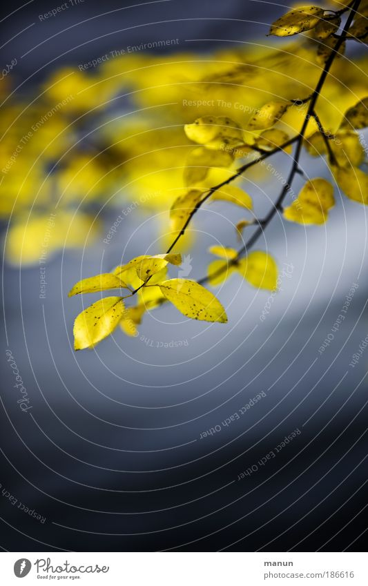 Bonjour tristesse Natur Wasser Baum blau ruhig Blatt Einsamkeit gelb Erholung Herbst Gefühle Tod Traurigkeit See Park Trauer