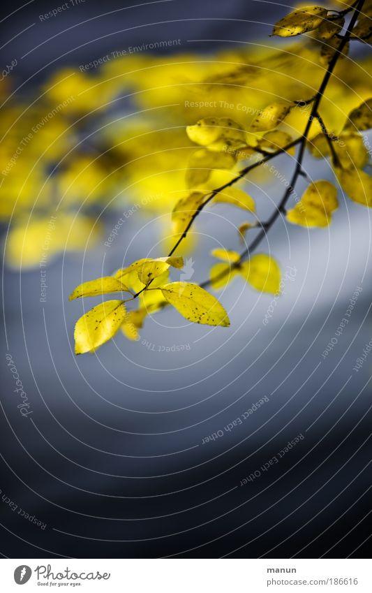Bonjour tristesse Sinnesorgane ruhig Trauerfeier Beerdigung Natur Wasser Herbst Baum Blatt Ast Herbstlaub Herbstfärbung herbstlich Park Seeufer Erholung