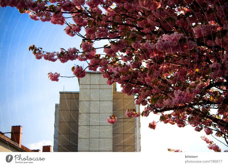 Zonefrühling Natur Pflanze Himmel Frühling Schönes Wetter Baum Blüte Chemnitz bevölkert Hochhaus Bauwerk Gebäude Architektur Plattenbau Mauer Wand Fassade Dach