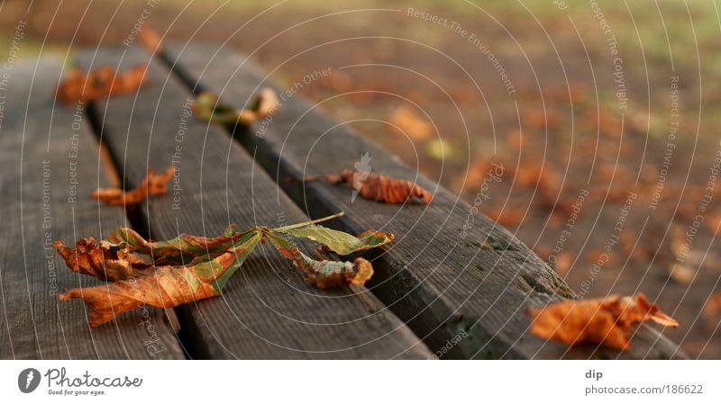 Parkbank. grün rot ruhig Blatt gelb Herbst Holz Wege & Pfade Park Wärme ästhetisch natürlich Gelassenheit trocken Bank Parkbank