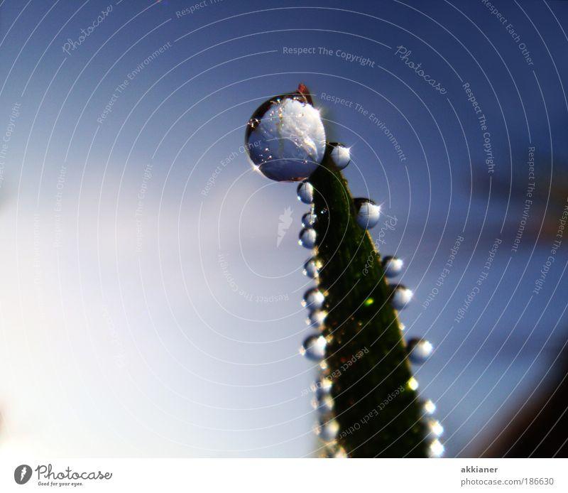 Frisch aufgetaut Umwelt Natur Pflanze Urelemente Erde Luft Wasser Wassertropfen Himmel Wolkenloser Himmel Frühling Sommer Herbst Wetter Schönes Wetter Gras