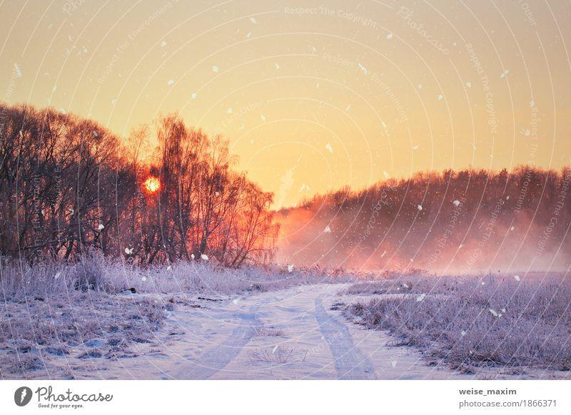 Nebelhafter Sonnenaufgang des Winters. Ländliche nebelige und frostige Szene Himmel Natur Ferien & Urlaub & Reisen blau weiß Baum Landschaft Ferne Wald gelb