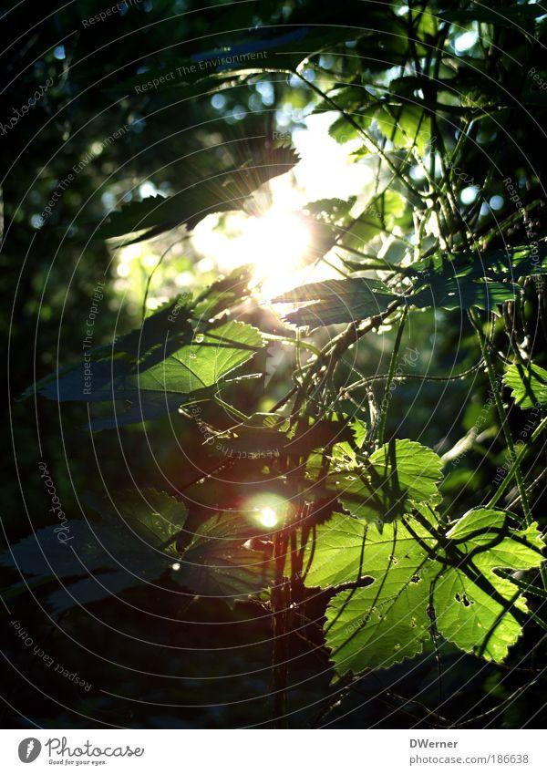 Sonneneinfall Natur Himmel Baum grün Pflanze Sommer Wald Leben Frühling Landschaft Stimmung glänzend Sonnenaufgang elegant Umwelt