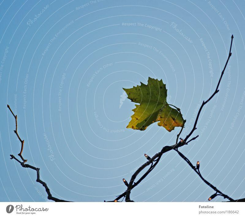 Einsam Himmel Natur blau Pflanze grün Blatt kalt Umwelt gelb Herbst natürlich hell Park Wetter Luft trist