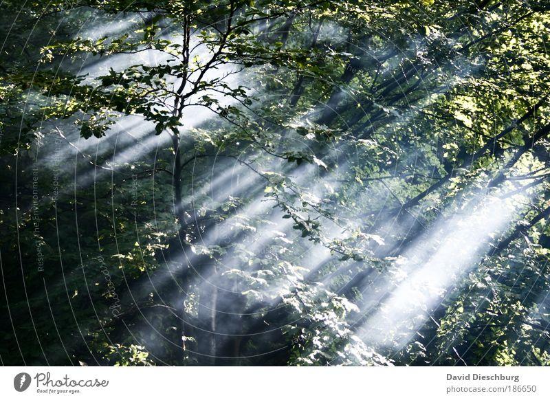 Beginn eines neuen Tages Umwelt Natur Landschaft Pflanze Luft Sommer Nebel Baum Blatt Grünpflanze Wald Ast Wildnis Farbfoto Außenaufnahme Strukturen & Formen