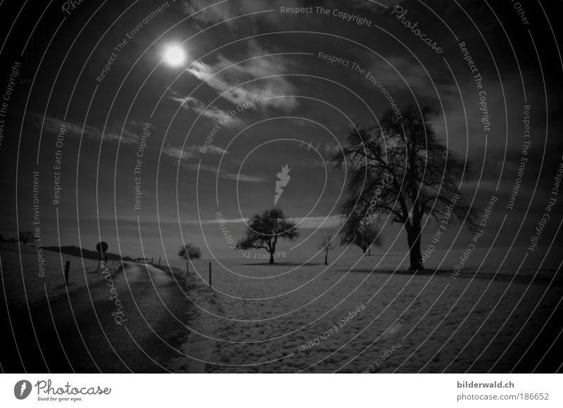 Morgenmond Umwelt Landschaft Himmel Wolken Mond Vollmond Schnee Baum Wiese Verkehrswege Straße Wege & Pfade dunkel kalt Angst Mondschein Ast Straßenrand Zaun