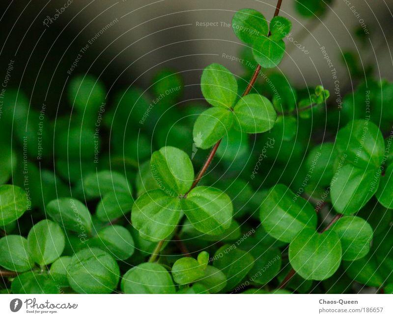 wildes Grün Glück Wohnung Natur Sommer Pflanze Blatt Grünpflanze Topfpflanze authentisch frisch natürlich grün Frühlingsgefühle Optimismus Leben Umwelt Wachstum