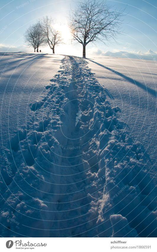 We will go straight for the sun Sonne Baum Erholung Winter kalt Wege & Pfade Schnee hell frei Zufriedenheit einzigartig Schönes Wetter Fußweg Ziel Lichtschein