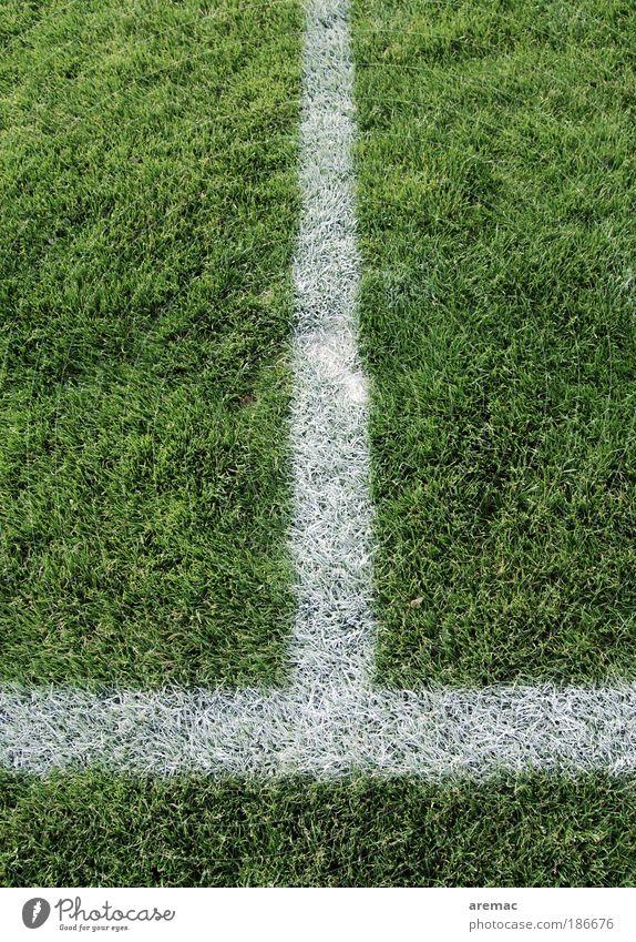 Linientreu Natur weiß grün Pflanze Sommer Sport Wiese Spielen Gras Sportplatz Landschaft Fußball Fußballplatz Sportstätten