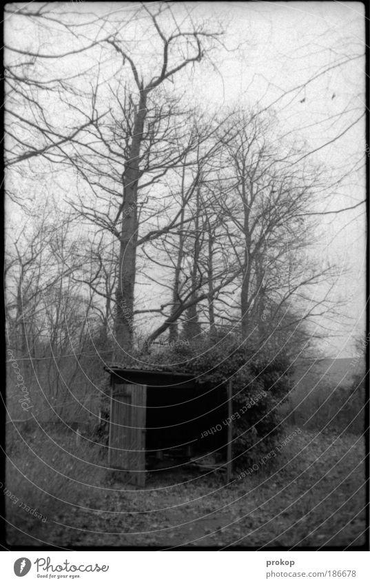 Meine ganz private Hölle Himmel Natur Baum Pflanze Einsamkeit Wald Tod Freiheit Gefühle Landschaft Umwelt Gras Schutz Verfall Müdigkeit Hütte