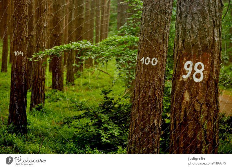 Baumzählung Umwelt Natur Landschaft Pflanze Wald Zeichen Ziffern & Zahlen Wachstum natürlich Umweltschutz Statistik 100 98 Baumrinde Reihe Farbfoto