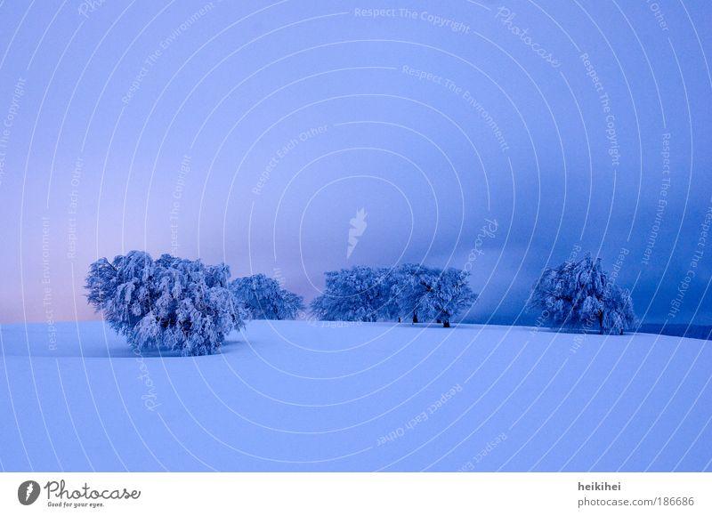 Winterstimmung Natur Himmel Baum blau Pflanze rot Einsamkeit kalt Schnee Erholung Wiese Gefühle Berge u. Gebirge Denken Landschaft
