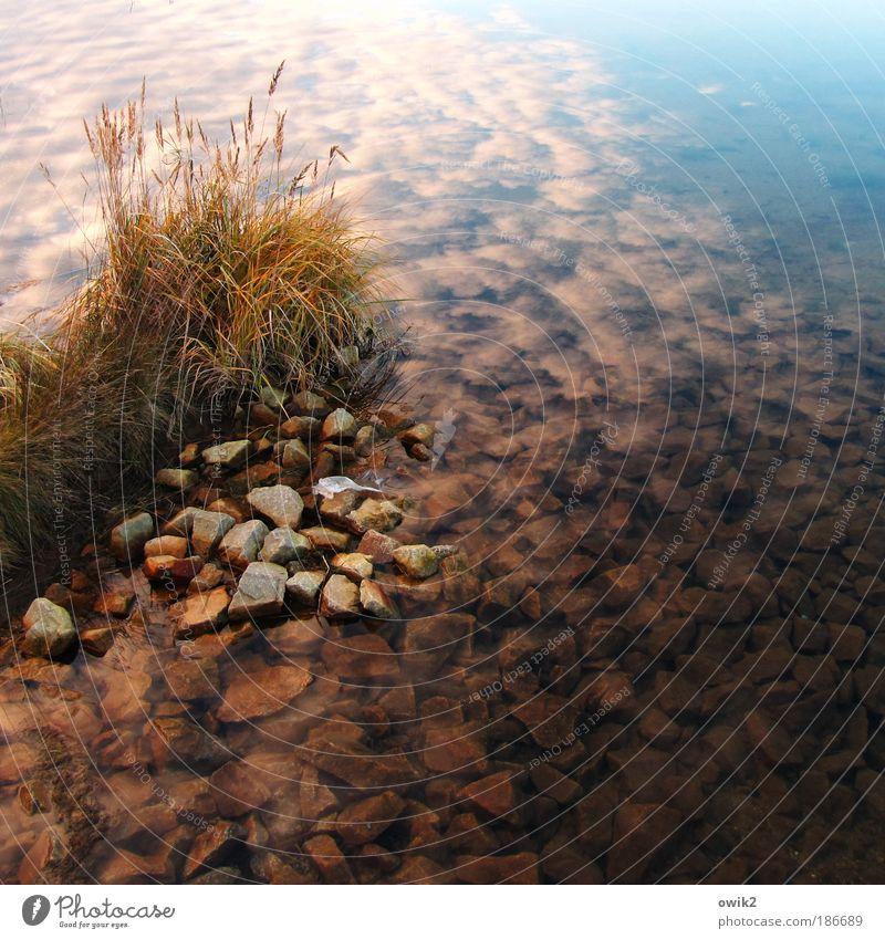 Bärwalder See Ferne Umwelt Natur Landschaft Pflanze Urelemente Wasser Himmel Wolken Herbst Klima Wetter Schönes Wetter Gras Wildpflanze Stein Küste Seeufer