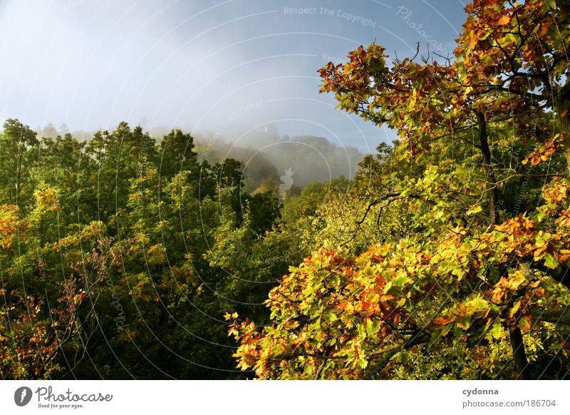 Wartburg im Nebel Natur Baum Ferien & Urlaub & Reisen ruhig Blatt Ferne Wald Leben Erholung Herbst Bewegung träumen Landschaft Umwelt Tourismus