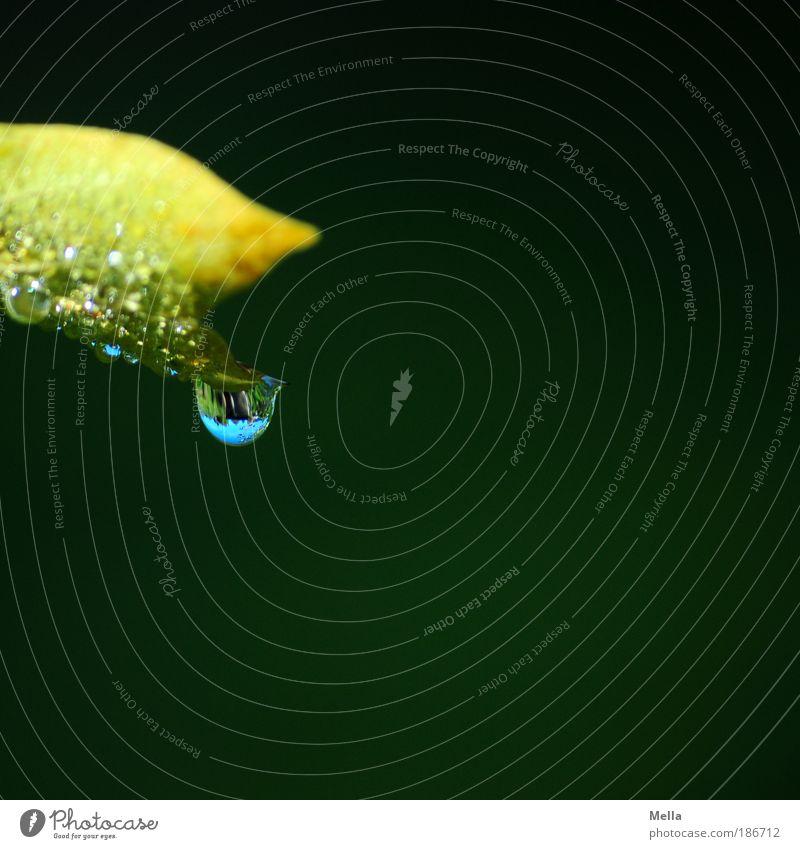 Mikrokosmos Umwelt Natur Pflanze Wassertropfen Blatt hängen Flüssigkeit glänzend klein nass grün Stimmung ruhig Reinheit rein Farbfoto Außenaufnahme