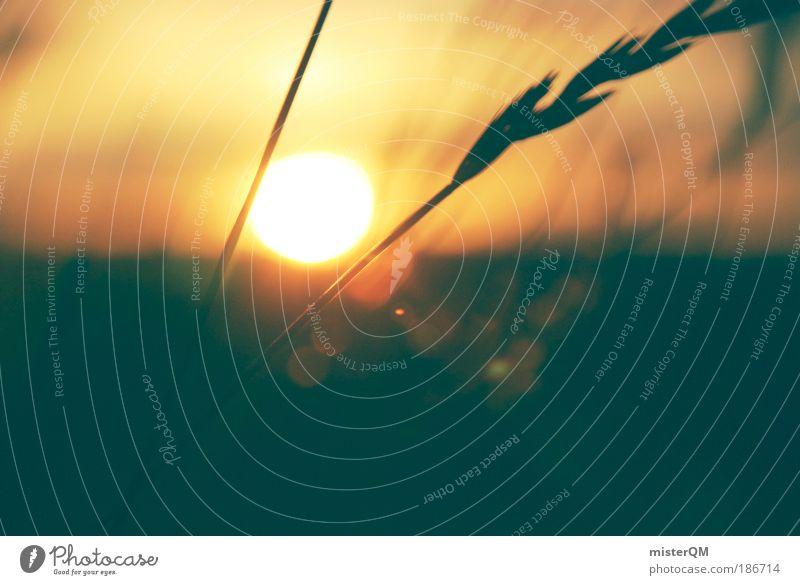 silent moments. Natur schön Meer ruhig Erholung Gras Wind Zeit Horizont Sonnenlicht Sonnenstrahlen Hoffnung Strukturen & Formen ästhetisch Zukunft