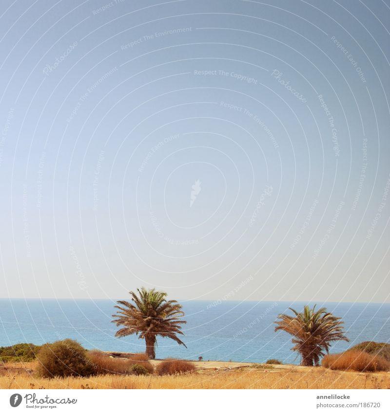 Palmenstrand Ferien & Urlaub & Reisen Tourismus Ausflug Ferne Sommer Sommerurlaub Sonne Sonnenbad Strand Meer Insel Umwelt Natur Landschaft Himmel Klima