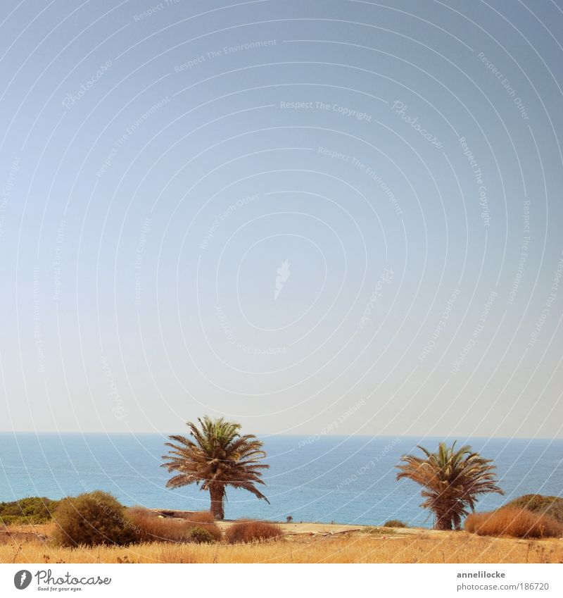 Palmenstrand Himmel Natur Sonne Sommer Strand Ferien & Urlaub & Reisen Meer Ferne Erholung Landschaft Umwelt Gras Wärme Küste Ausflug Insel