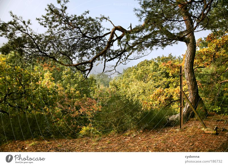Frei gewachsen Natur schön Baum Blatt ruhig Wald Ferne Erholung Umwelt Landschaft Leben Herbst Freiheit Wege & Pfade träumen Horizont