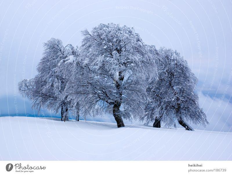 Wintermärchen Umwelt Natur Landschaft Pflanze Eis Frost Schnee Baum Berge u. Gebirge gigantisch blau schwarz weiß bizarr Farbfoto Außenaufnahme Menschenleer