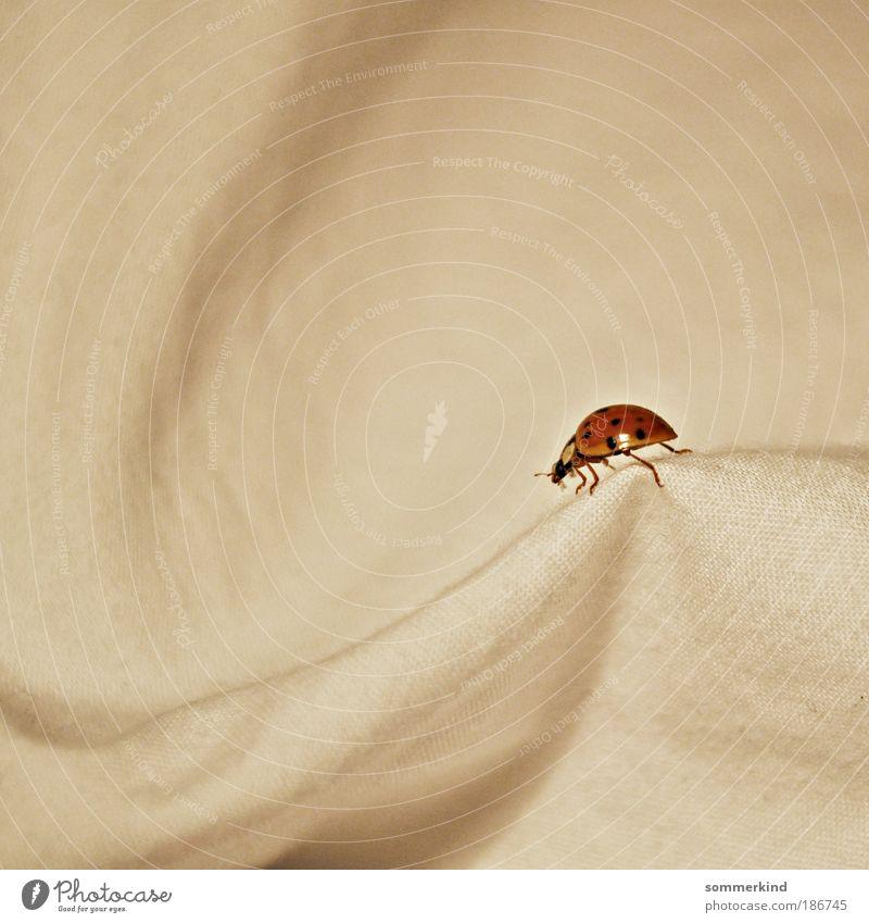 Abstieg Natur weiß rot Tier schwarz Umwelt Berge u. Gebirge Beine Wildtier Punkt Gipfel Hügel Alpen Stoff Hautfalten Insekt