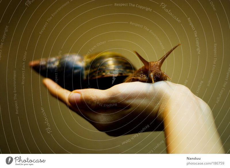 Kuscheltier Natur Hand Mensch ruhig Tier Textfreiraum Schutz 1 berühren festhalten niedlich Schnecke Fühler krabbeln tragen langsam