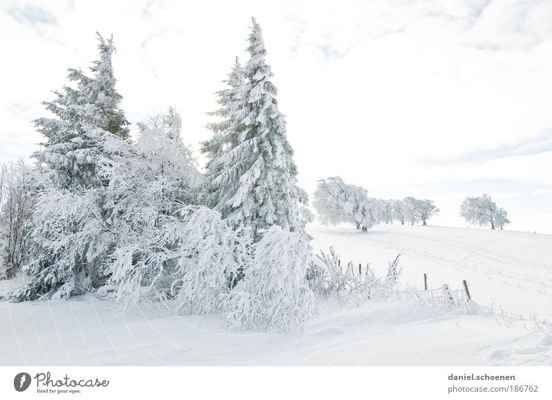 bald wird`s kälter !! Ferien & Urlaub & Reisen Tourismus Ausflug Winter Schnee Winterurlaub Klima Klimawandel Wetter Schönes Wetter Eis Frost Baum hell weiß