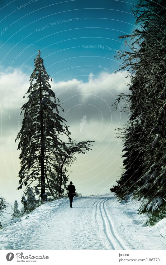 Allein Mensch Frau Himmel Natur blau Einsamkeit Winter Wolken ruhig Erwachsene Erholung Wald Ferne Berge u. Gebirge Leben Schnee