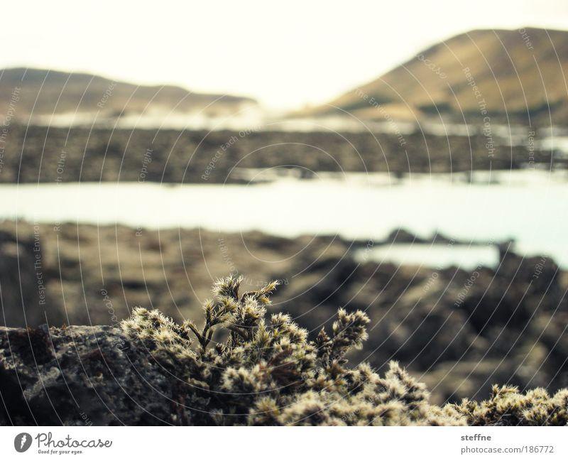 icelandic summer Umwelt Natur Landschaft Pflanze Wasser Wolkenloser Himmel Schönes Wetter Gras Moos Hügel Vulkan See Island ruhig Einsamkeit Ödland Farbfoto
