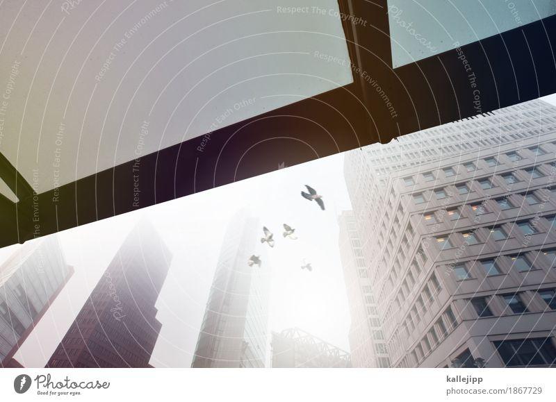 urban november Stadt Wolken Tier kalt Architektur Herbst Berlin Freiheit fliegen Nebel Hochhaus Flügel Tiergruppe Klima Dach Bauwerk