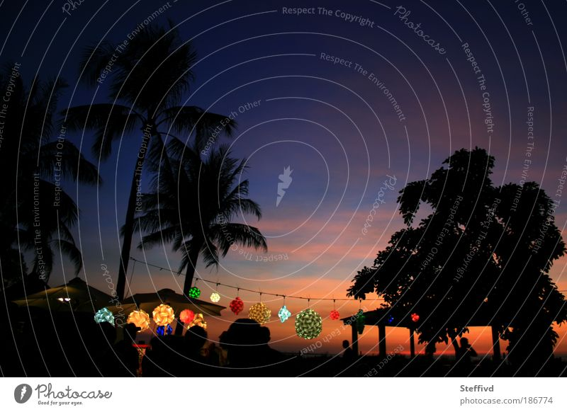Mindimarket Baum Pflanze Sommer ruhig Erholung Zufriedenheit Romantik Lebensfreude Gelassenheit exotisch Sonnenuntergang Australien Fernweh Marktplatz Stadtrand